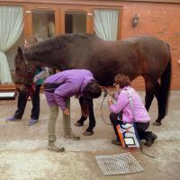 MLS laser practical session on a horse