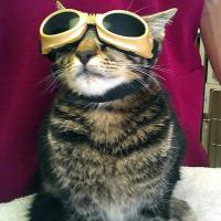 ARLnow - MLS Laser Therapy for cats