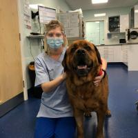 MLS® laser therapy in Bruno's post-surgical rehabilitation