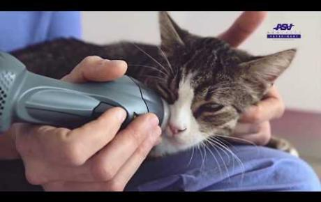 Embedded thumbnail for MLS® Tutorial | mouth | Cat