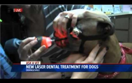 Embedded thumbnail for Fox40 | Laserterapia MLS® dentale per cani