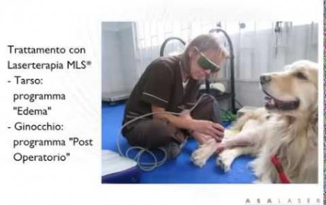 Embedded thumbnail for MLS® per Violeta, Golden Retriever con edema post-operatorio