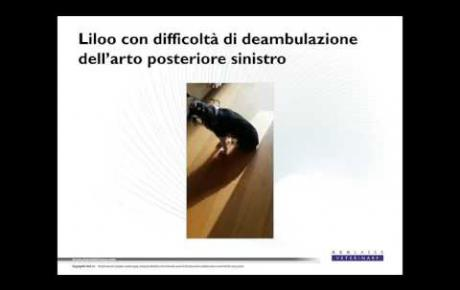Embedded thumbnail for Liloo, King Charles Cavalier Spaniel con lesione al nervo sciatico